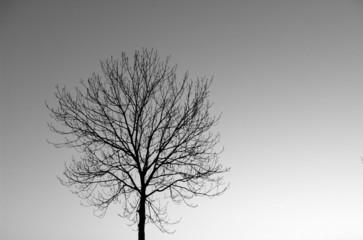tree in winter grey sky