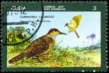 CUBA - CIRCA 1976 Flicker