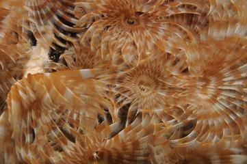 spiro-plongee-caraibe