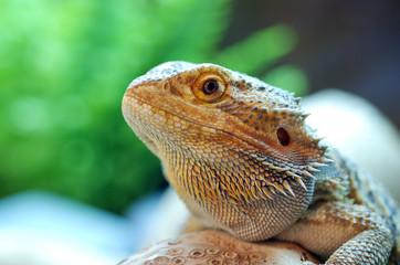 Perched Lizard