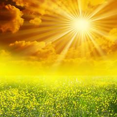 Papiers peints Jaune Prairie soleil mains coeur
