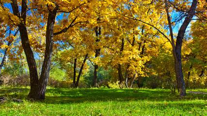 day autumn park