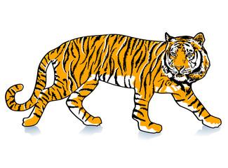 schleichender Tiger