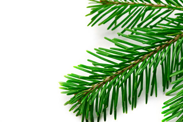 Firtree isolated on white