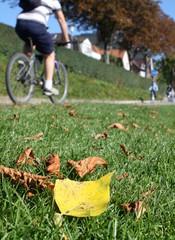 Radfahrer im Herbst II