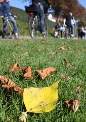 Radfahrer im Herbst III