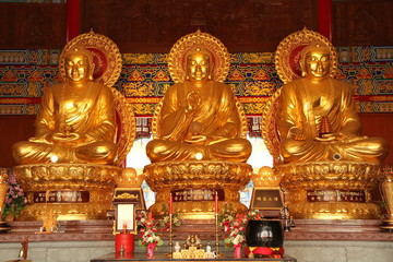 Three golden buddha