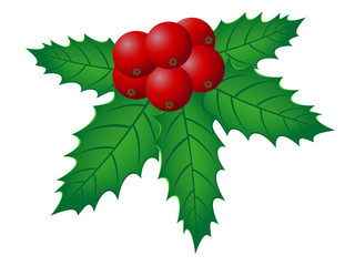 christmas holly vector illustration