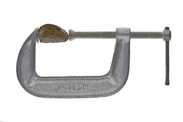 Brazilnut in silver C-clamp