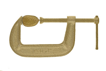 Almond in gold C-clamp