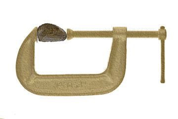 Brazil nut in gold C-clamp