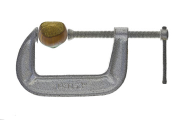 Hazelnut  in silver C-clamp