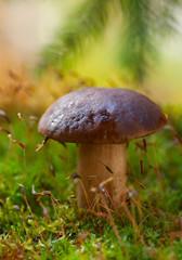 Mushroom on moss