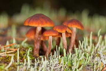 mushrooms in a moss