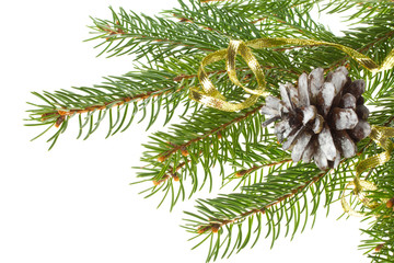 decorated fir tree with cone