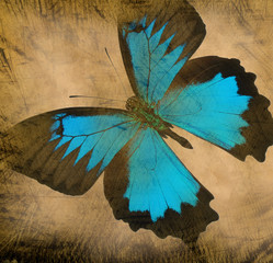 old grunge butterfly paper texture background