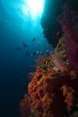 fish,divers and ocean