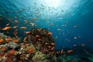 underwater scenery at Yolanda reef