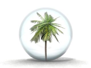 palmier en bulle