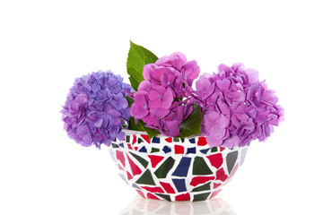colorful hydrangea in a mosaic flowerpot isolated on white