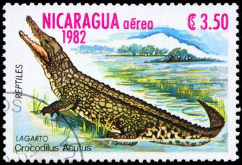 NICARAGUA - CIRCA 1982 Crocodile
