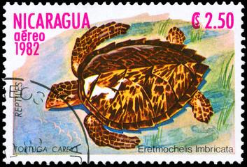 NICARAGUA - CIRCA 1982 Turtle