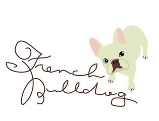 犬 フレンチブルドッグ