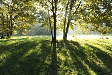 zona sile paesaggio alberi 1268