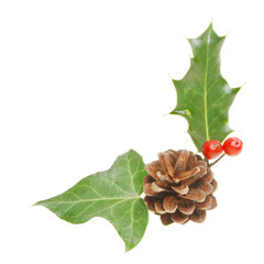 Holly ivy and pine cone