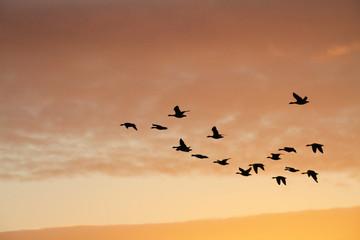 Birds in Sunset Sky