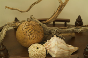 Still life with coral and shell