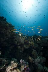 coral, fish and ocean