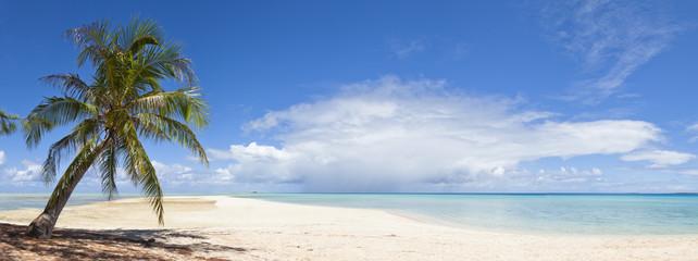 Palm tree and white sand beach panoramic view
