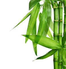 Fototapete - Bamboo isolated on white