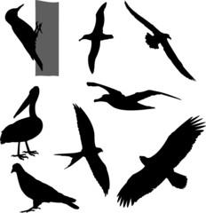 birds silhouettes - vector