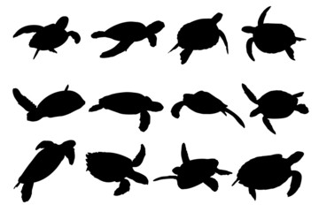 Turtle Vector Silhouettes
