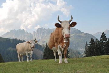 Schweizer Bergkühe mit Glocken in den Schweizer Alpen