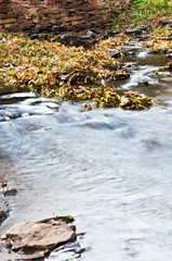 Little forest river 2