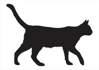 cat shilouette