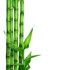 Fototapete - Bamboo over white