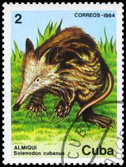 CUBA - CIRCA 1984 Solenodon