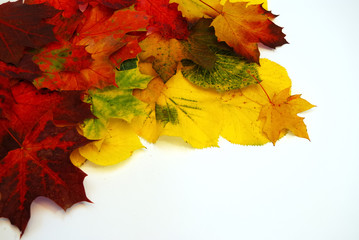 Colored leaves 3
