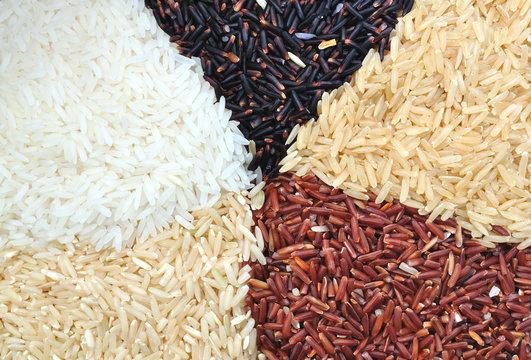 Organic Rice 5 Color