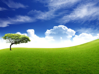 Meadow with green grass and blue sky with clouds and tree .