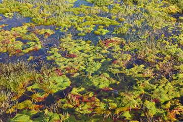 Arctic moss � polar colors