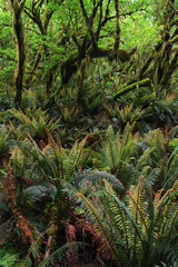Dense rainforest with ferns and trees