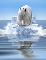 Eisbär im Meer
