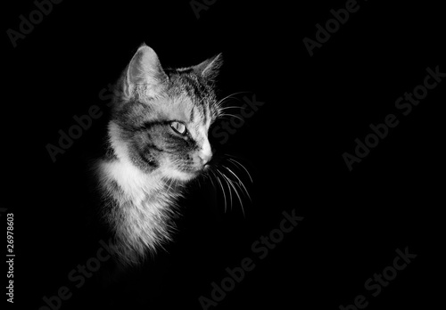 "Image De Chat Noir Et Blanc portrait de chat en noir et blanc"" stock photo and royalty-free"