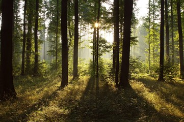 Keuken foto achterwand Bos in mist Sunlight falling into the misty spring forest at dawn