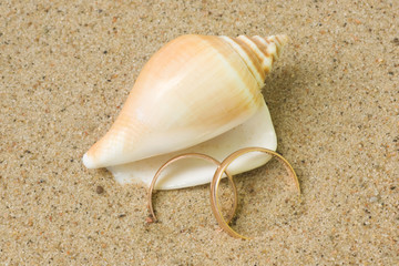 Seashell with wedding rings
